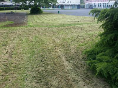 pelouse tondue au lycée Pasteur Lille