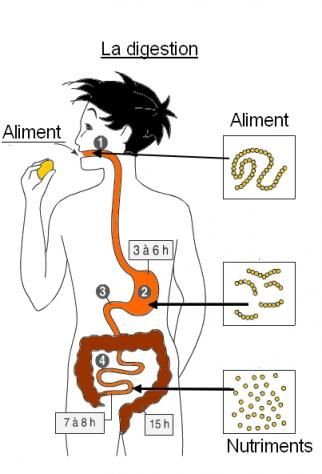 Bilan digestion