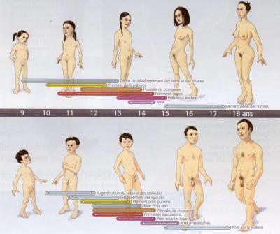 Changement puberte 1