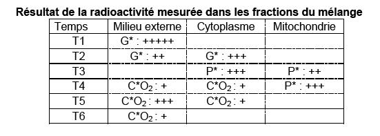 Parcours carbone dans cellule a partir de glucose radioactif 1