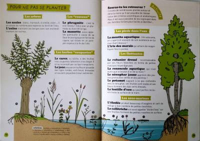Plantes mare