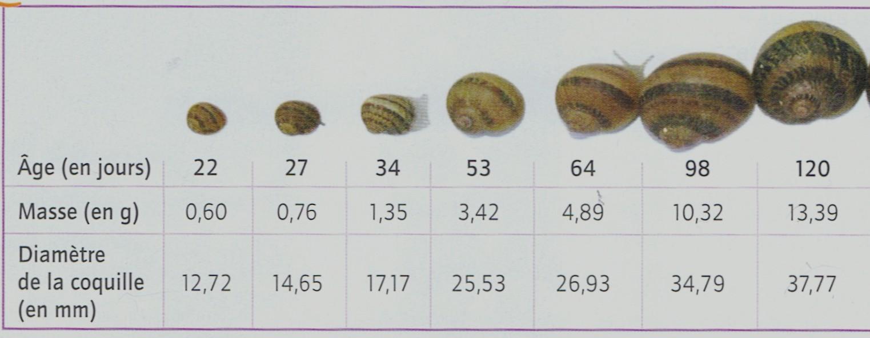 Prod matiere escargots2