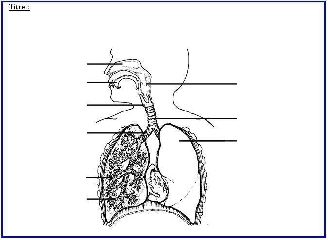 Populaire Apport de dioxygène aux organes DW94