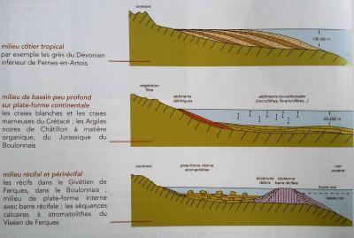 Sedimentation marine